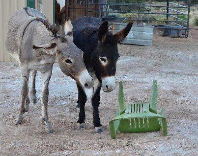 Democrats Discussing Foreign Policy With Empty Chair
